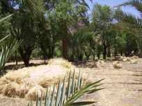 J5 25 repas oasis vallée Oussdidene