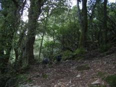 J9 13 cochons dans la forêt