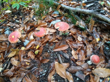 des champignons aussi...